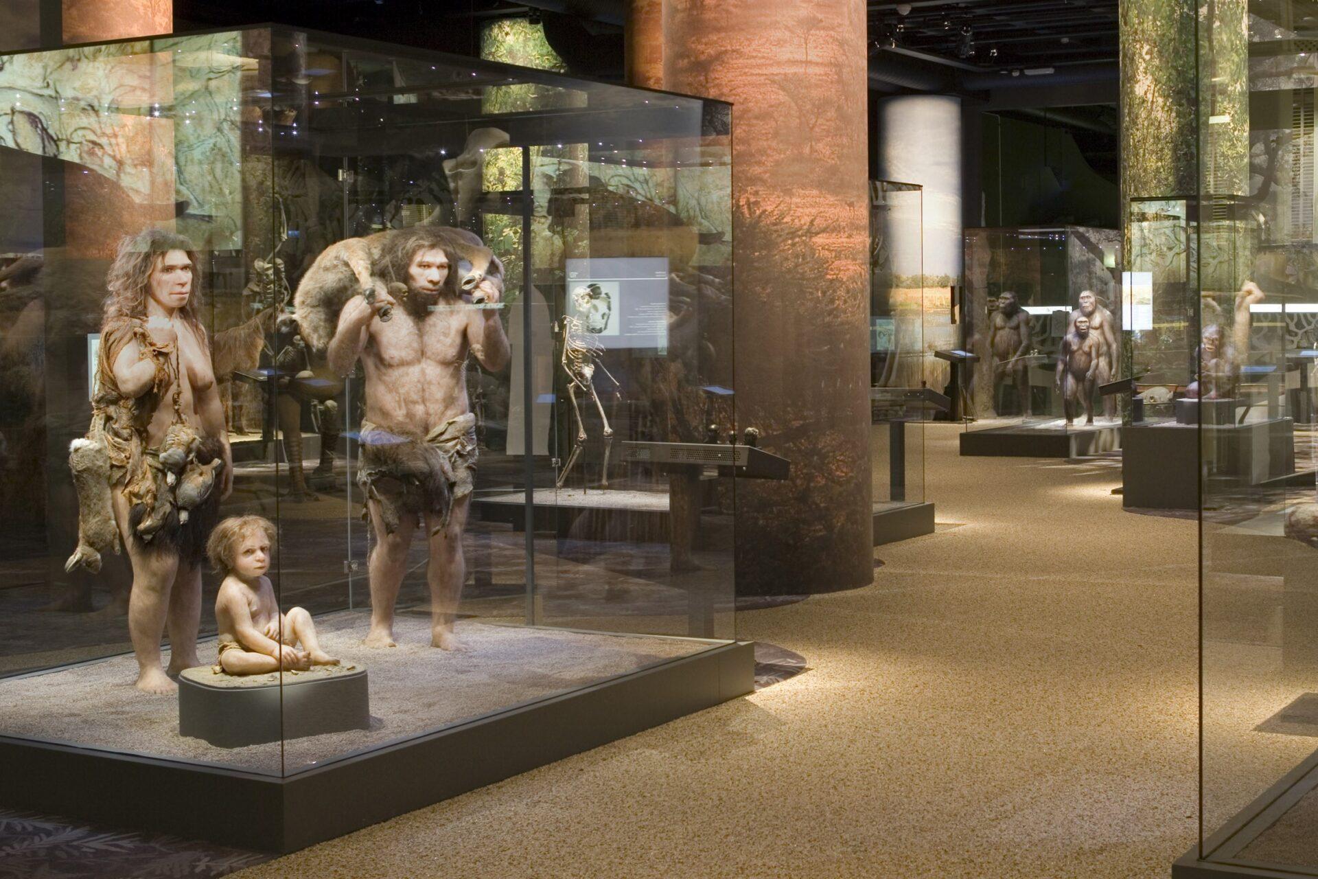 Неандертальцы в Шведском музее естественной истории